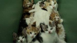 Вчені наблизилися до лікування алергії на котів