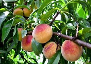 Здорове харчування - продовжують життя - фрукти - овочі