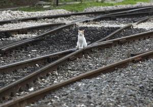 Новости России - РЖД - Чистая прибыль российской железнодорожной госмонополии обрушилась вдвое