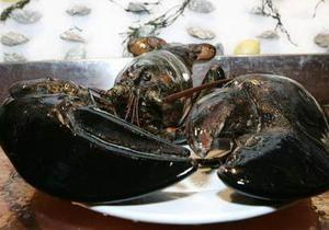 Розмір врятував омара-ветерана від поїдання