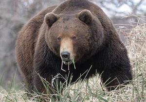 Камчатка - оленяр - ведмідь - смерть