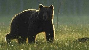 WWF: біорізноманіття Карпат перебуває під загрозою