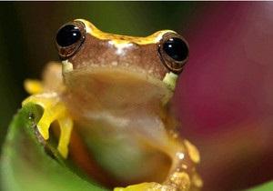 Дослідження: під загрозою знищення перебувають 50% видів рослин і 30% видів тварин