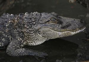 Новини Австралії - крокодил
