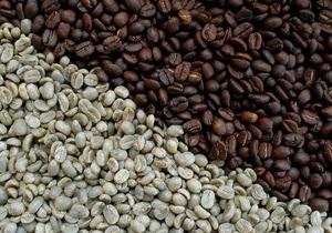 Кава - зерна - дослідження - ожиріння - схуднення