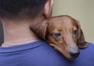 Ветеринари заявляють, що домашнім тваринам також шкодить пасивне куріння