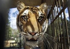 Новини США - У США у вбиральні цирку жінка зіткнулася з тигром