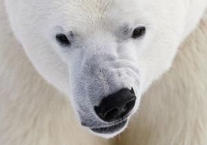Новини науки: Російську арктичну експедицію переслідує білий ведмідь