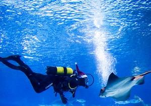 Дайвінг - морський скат - Манта-Рей - подорожі - туризм - відпочинок