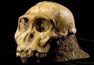 Новини науки: Зуби австралопітеків підтвердили їхню спорідненість з людиною