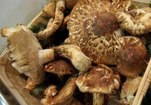 Новини Севастополя - Беркут - отруєння - гриби - У Севастополі дев ятеро беркутівців отруїлися грибами