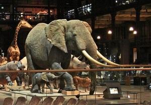 У паризькому музеї чоловік з бензопилою напав на опудало слона, що належав Людовику XVI