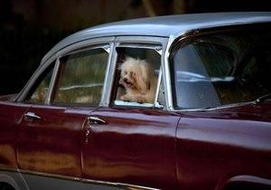 США - собака - кермо автомобіля -пішохід