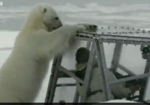 Автора фільму про білих ведмедів можуть оштрафувати за метод зйомок