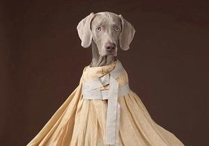 Собаки як модний тренд: їх знімають у рекламі одягу і випускають на подіум
