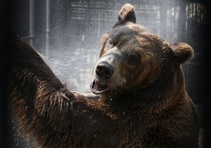 На Алтаї шукають ведмедя, що прокинувся зі сплячки і втік з приватної садиби