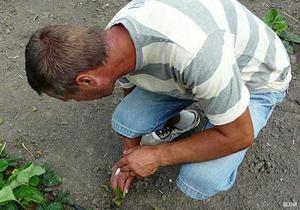 DW: Український агробізнес. Бракує кваліфікованих агрономів