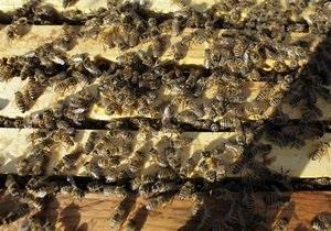 В ПАР більше 40 дітей потрапили до лікарні після нападу бджіл