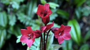 Горщики обмежують ріст рослин - дослідження