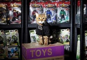 У Британії склад іграшок охороняє кішка