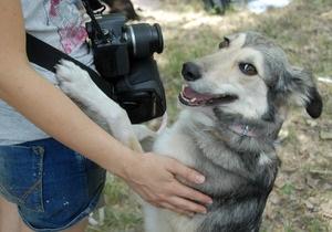 У Києві пройде виставка безпородних собак