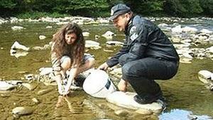 У карпатські ріки хочуть повернути форель
