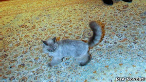 Кіт Медведєва став зіркою інтернету