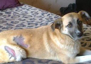 Кияни заявляють про нові вбивства бездомних тварин