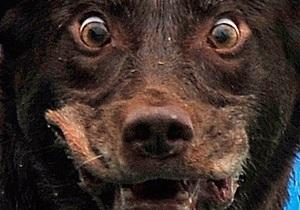 У Рівненській області скажений собака покусав трьох школярів