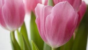 Жінкам - тюльпани, чоловікам - витрати. Огляд ЗМІ за 7 березня