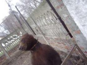 Врятувати ведмедя Потапа: міністр доручив перевірити умови утримання тварини