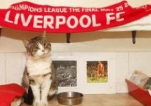 Знаменитый кот с Энфилда попал в приют для животных