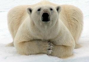 Coca-Cola изменит дизайн банок ради спасения белых медведей