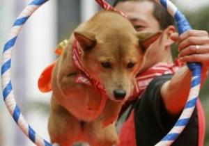 К Евро-2012 киевский цирк подготовит номер с участием собак-футболистов