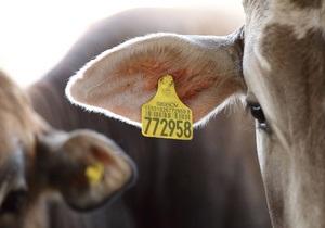 Производитель молока в Украине и России за полгода сократил чистую прибыль на 43%