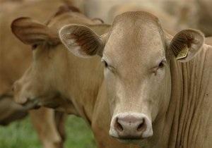 Один из крупнейших производителей молока в Украине за полгода увеличил прибыль на 74%