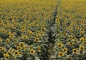 Крупнейший украинский производитель подсолнечного масла увеличил прибыль на 43%