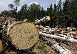 За полгода объем продукции лесозаготовок в Украине вырос на 48%