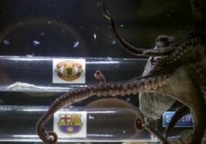 Испанский осьминог предсказал победу МЮ в финале Лиги Чемпионов