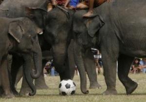 В Непале состоялся футбольный матч между слонами