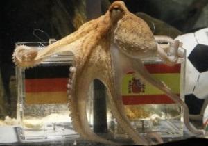 Осьминог Пауль признан самым необычным животным этого года