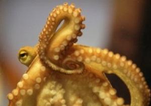 Преемника осьминога-оракула Пауля представили общественности
