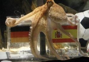 Преемник осьминога Пауля появится в аквариуме в Германии на следующей неделе