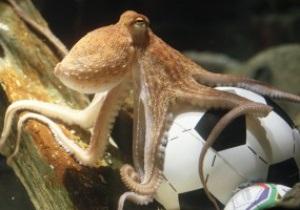 Смерть осьминога Пауля попала в тренды Твиттера