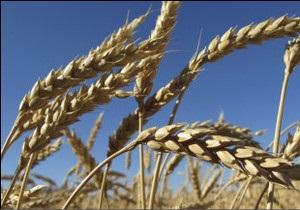 Азарова просять розблокувати експорт зерна