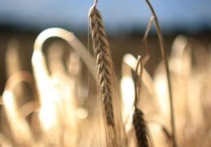FT: Європа потерпає через посуху в Україні