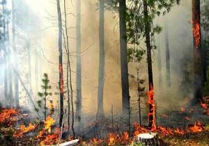 Лісові пожежі на сході  локалізували