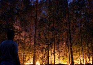 Медвєдєв звільнив за пожежі військових
