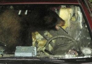 Ведмідь покатався на машині у США