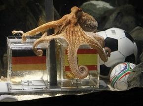 Послевкусие ЧМ-2010: Меркель и Медведев поужинали собратом осьминога Пола